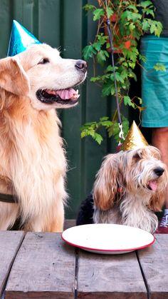 Frozen Dog Treats, Diy Dog Treats, Animals And Pets, Cute Animals, Dog Cakes, Dog Snacks, Homemade Dog, Baby Dogs, Pet Shop