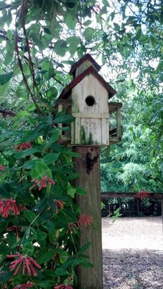 Blue bird house with red honeysuckle.