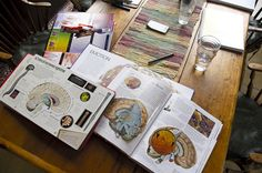 Elementary Science Ideas