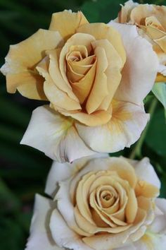 A touch of this warmer gold rose will complement our taupe, bronze and gold shades