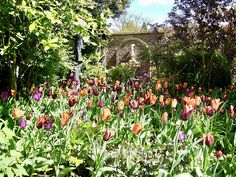Tulpen in een landelijke tuin