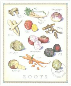Vegetable prints from John Burgoyne of Cook's Illustrated