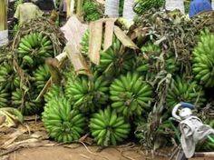 Village Life and Poverty - REAL PARTNERS UGANDA