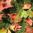 How to Knit Everlasting Autumn Leaves: No Raking Required