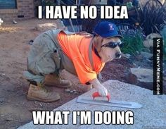 Construction Dog: | 36 Dog Pictures On The Internet That Are Never Not Funny