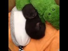 World Otter Day is today. Here's a sleeping baby otter , World Otter Day is today. Here's a sleeping baby otter World Otter Day is today. Here's a sleeping baby otter. So Cute Baby, Cute Babies, Lil Baby, Baby Otters, Cute Little Animals, Cute Funny Animals, Animal Pictures, Cute Pictures, Tier Fotos