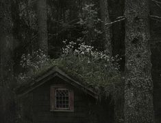 a cottage in the woods Sombra Lunar, Witch Cottage, Forest Cottage, Forest House, Over The Garden Wall, 3d Fantasy, Southern Gothic, Dark Forest, Magical Forest
