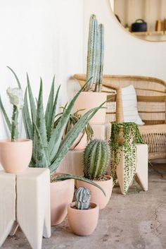 Grouped cactus ideas + things you should know - House Plants Cacti And Succulents, Potted Plants, Indoor Plants, Catus Plants, Foliage Plants, Decoration Cactus, Cactus E Suculentas, Deco Nature, Deco Floral