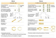 Mitosis and meiosis comparison chart video and pictures diffen mitosis vs meiosis table summary fandeluxe Gallery