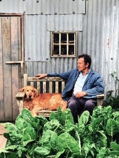 May 2020 — Monty Don Lily Beetle, Best Eye Candy, Monty Don, Early Spring Flowers, Herbaceous Perennials, Grass Seed, Growing Seeds, New Growth, Retriever Dog