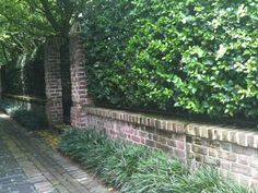 Image result for liriope  green wall