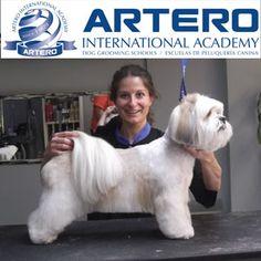 Mª Ángeles Collado, alumna de Artero International Academy en Mallorca, nos muestra sus prácticas del curso Avanzado de Peluquería canina exclusivo para profesionales.  Infórmate de nuestros cursos, varios niveles de aprendizaje. Disponemos de cursos para quien quiere ser profesional y para los que ya son profesionales. +info 93 515 00 35
