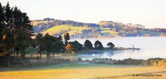 Mist over Omapere Lake, Okaihau, Northland, New Zealand Mists, New Zealand, Nature, Pictures, Painting, Art, Photos, Art Background, Naturaleza