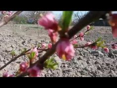 Fruit, Garden, Youtube, Plants, Garten, Lawn And Garden, Gardens, Plant, Gardening