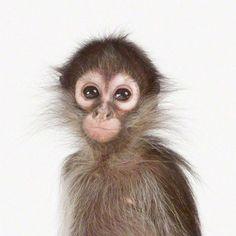 beautiful little monkey posing for a photo