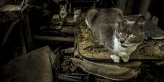 Cat with kittens in a abandoned factory