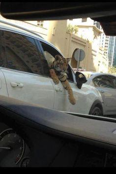 When the car isn't enough!