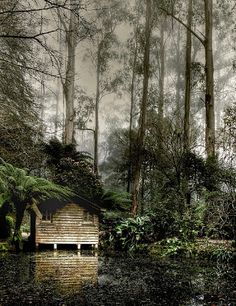 Amazing Snaps: Relax in Forest | See more