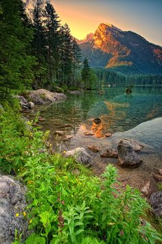 Nature, clear lake sunset forest pine trees mountains landscape