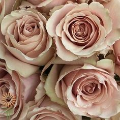 Beige Quicksand Roses l Wholesale Flowers & DIY Wedding Flowers Beige Wedding, Rose Wedding, Floral Wedding, Wedding Stuff, Rustic Wedding, Cream Roses, Blush Roses, Wholesale Roses, Diy Wedding Flowers