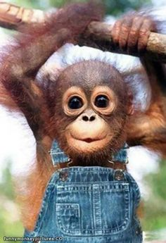 cute monkey images facebook | Cute Monkey Is Cute - Funny Monkey Pictures