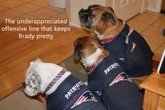 New England Patriots dog. #spawty #patriots #tombrady