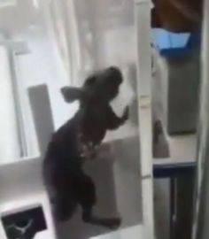 Rat Climbs Inside Incubator, Bites Premature Baby Fighting To Live (Video)