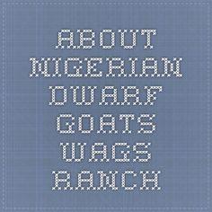 About Nigerian Dwarf Goats - Wags Ranch