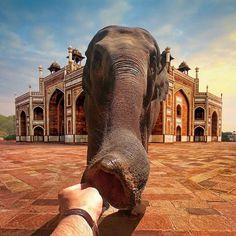 From instagram @nois7 (Robert Jahns) Wish. Dream. Believe. India #elephant #india #dream #elephant