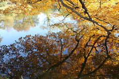 Golden Reflection Photograph by John Telfer - Golden Reflection Fine Art Prints and Posters for Sale