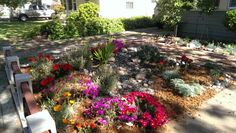 Ice plants & poppies in bloom 4/15