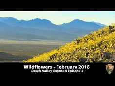 ❤ =^..^= ❤   Cat Patches ~ Death Valley Super Bloom! | National Park Service Video ~ a must watch!