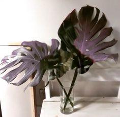 Home deco plants