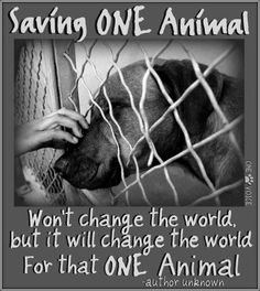 Change the world for that one animal.