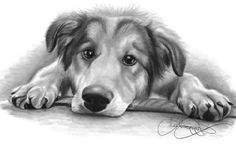 Learn how to draw your dog with ease thanks to this FREE download on drawing animals!