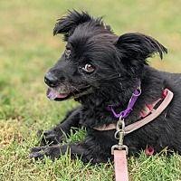 Dachshund Adoption, Pet Adoption, Durham North Carolina, Mixed Breed, Meet, Babies, Cats, Animals, Babys