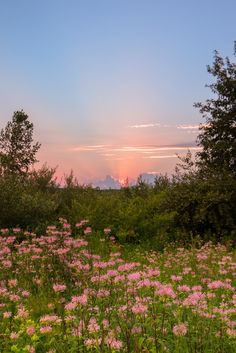 photo scenery Think spring! Wildflower Sunset at Stony Creek Metropark. Spring Aesthetic, Nature Aesthetic, Flower Aesthetic, Aesthetic Drawing, Aesthetic Vintage, Aesthetic Outfit, Aesthetic Painting, Aesthetic Dark, Aesthetic Clothes