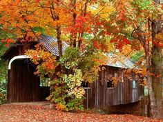 Our boys love covered bridges and I've always wanted to explore New England in the fall- we'd take a week long road trip to see as many bridges and colors as we could pack in! Autumn Scenery, Seasons Of The Year, All Nature, Fall Pictures, Old Barns, Covered Bridges, New England, Beautiful Places, Beautiful Pictures