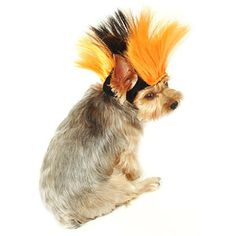 Yorkie looking sad. He's not into the mohawk.