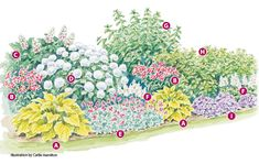 Four-Season Hydrangea Border - Four-season garden border plan: Looking for a hydrangea-filled flower border that will look great year-round? Try our four-season garden border plan. Includes a plant list and how-to tips! Smooth Hydrangea, Hydrangea Not Blooming, Hydrangea Garden, Hydrangeas, Perennial Garden Plans, Flower Garden Plans, Flower Garden Design, Flower Garden Borders, Flower Garden Layouts