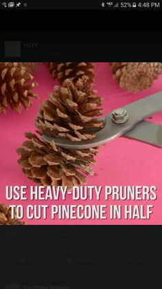 Cut flowers from pine cones with a good pair of sharp snips to make Christmas ornaments Pine Cone Art, Pine Cone Crafts, Pine Cones, Pinecone Ornaments, Christmas Ornaments To Make, Christmas Crafts, Christmas Decorations, Pine Cone Flower Wreath, Easy Crafts To Sell