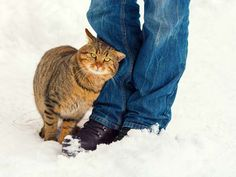 A cat rubs against people to mark its territory.