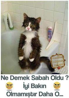 Komik Gunaydin Mesajları facebook
