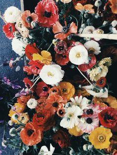 Poppies! | Emilie Ristevski  http://emilieristevski.vsco.co/media/524404ef596808ff24000000