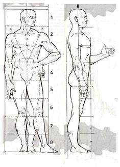 Proporciones del cuerpo humano masculino Human Anatomy Drawing, Human Figure Drawing, Figure Sketching, Body Drawing, Anatomy Art, Male Drawing, Anatomy Sketches, Drawing Sketches, Art Drawings