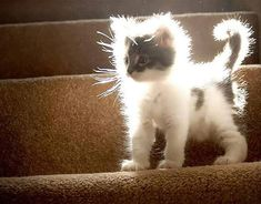 Kitten in the sunlight :)