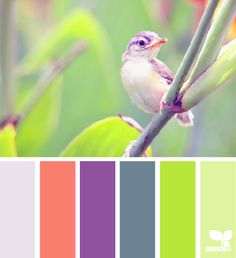 nature brights color palette from Design Seeds Scheme Color, Colour Pallette, Colour Schemes, Color Combos, Color Patterns, Design Seeds, Colour Board, Color Swatches, Color Stories