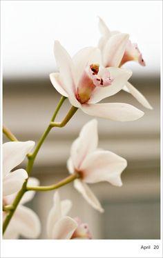 orquideas....