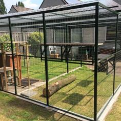 211 Cat Heaven, Fall In Luv, Cat Enclosure, Cat Garden, Cat Room, Outdoor Cats, Animal House, Guinea Pigs, Animal Shelter