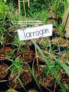 Tarragon Spices, Herbs, Spice, Herb, Medicinal Plants